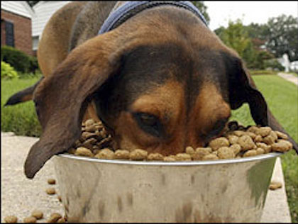 Pure Pet Food Review Why Is Dehydrated Dog Food Better