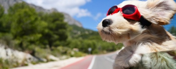 10 Dog Travel Essential Supplies