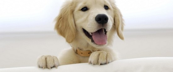 4 Essential Steps to Make Your Dog Happy