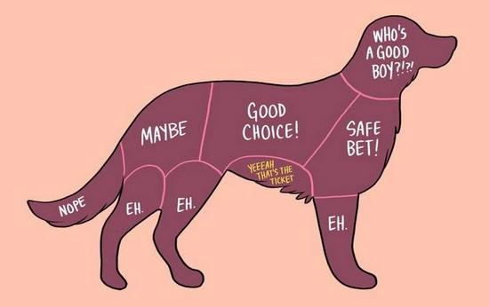 scratch a dog