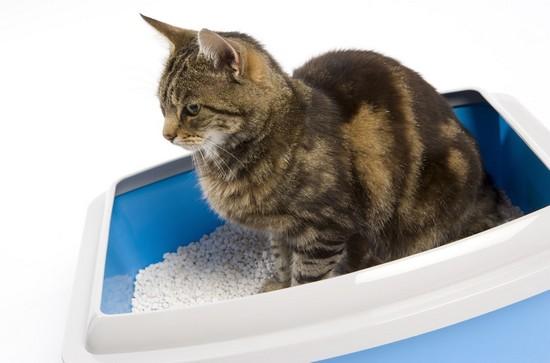 Cat in litter box