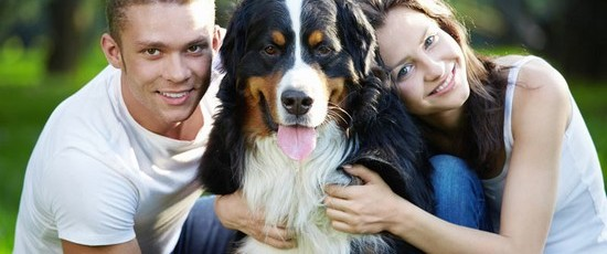 All About Vitamins for Dogs – Usage & Best Supplements to Consider Buying