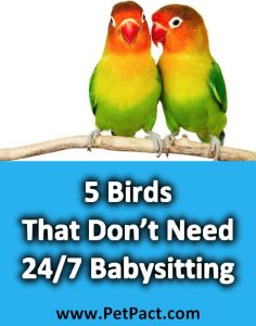 5 Birds That Don T Need 24 7 Babysitting And Make Good Pets Petpact Com