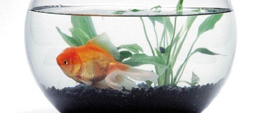 10 Reasons Why Fish Are the Third Most Popular Pet