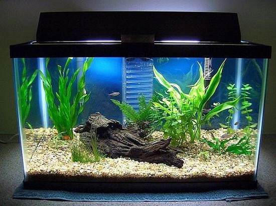 fish tank decoration