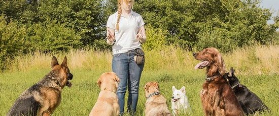 Puppy Training: The Basics For You and Your Canine Friend