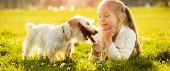 Kids and Dogs: The Basic Safety Guide