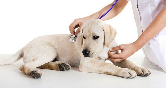 What should you do if you notice your dog has been affected by fleas or ticks