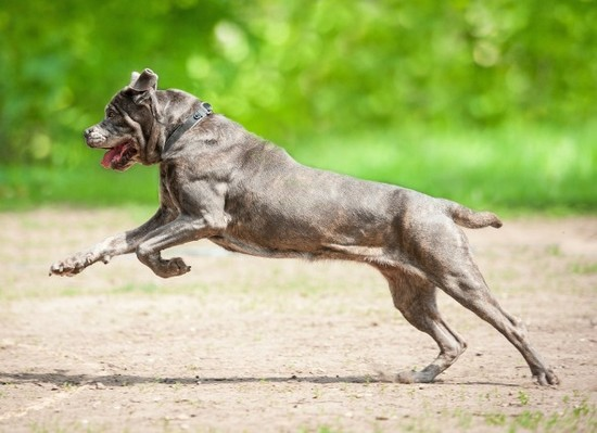 arthritis treatment for dogs