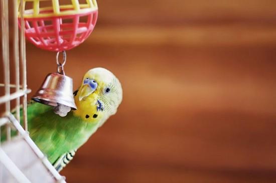 Clean and Pristine bird