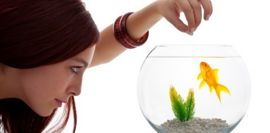 How should you feed your goldfish