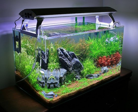 How should you maintain your tank