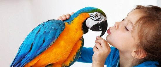 The Essential List of Equipment For Pet Birds