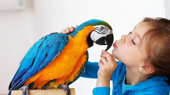 List of Equipment For Pet Birds