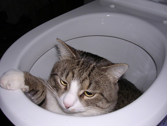 Toilet training for cats