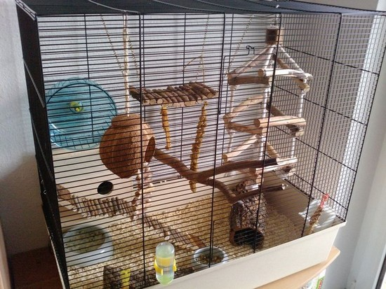 mice enclosure pet food