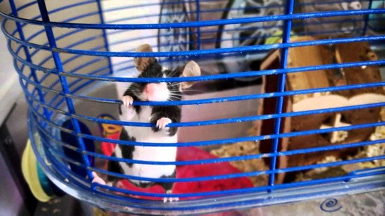 mice enclosure pet