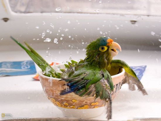 pet bird bath