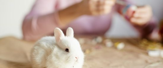 The Ultimate Guide to Keeping and Caring For Rabbits
