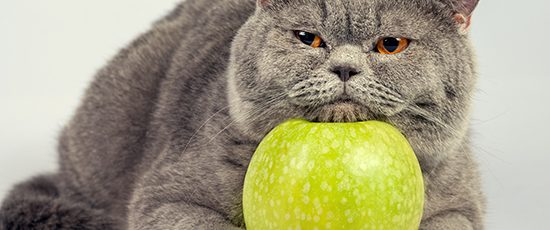 5 Crucial Ways to Keep Your Cat Fit and Healthy