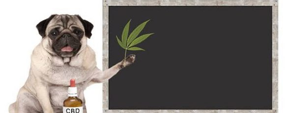 Is CBD Oil for Dogs A Viable Option?