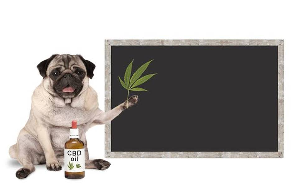 cbd oil fro dogs