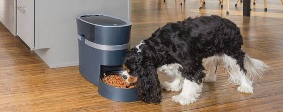 The Known Advantages of Using an Automatic Pet Feeder
