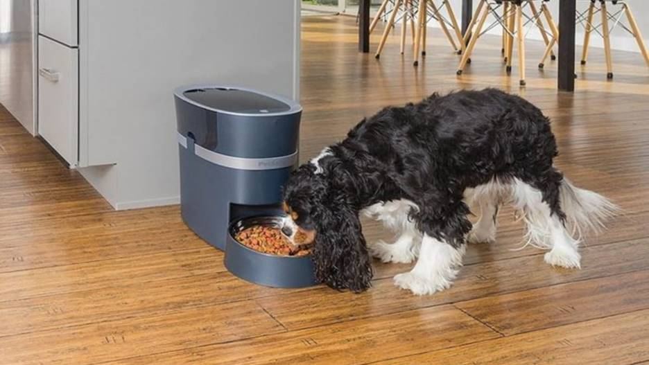 dog using an automatic feeder