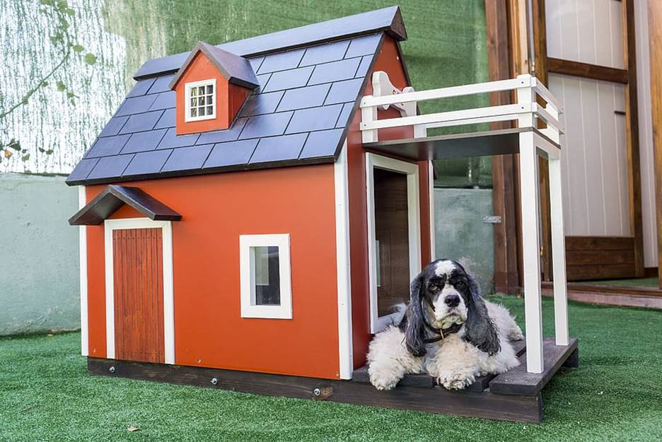 factors to consider when buying a dog house