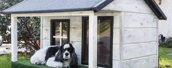 What Makes A Good Outdoor Dog House?
