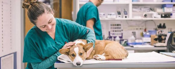 A Couple Of Reasons Why You Should Visit An Animal Hospital
