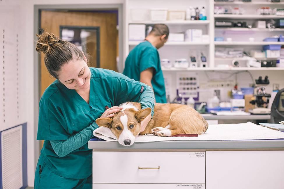 Why go to an animal hospital