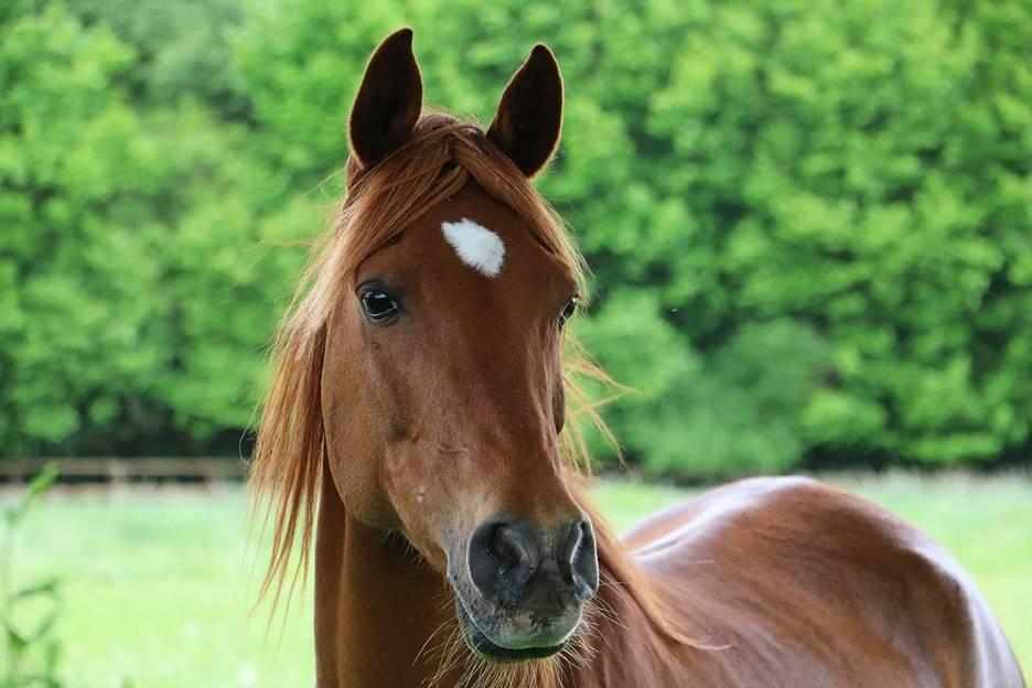 animal therapeutics for horses