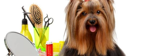 Several Reasons To Consider Miami Mobile Dog Grooming