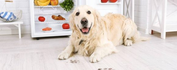 Chicken for Dogs and Myths to Know About