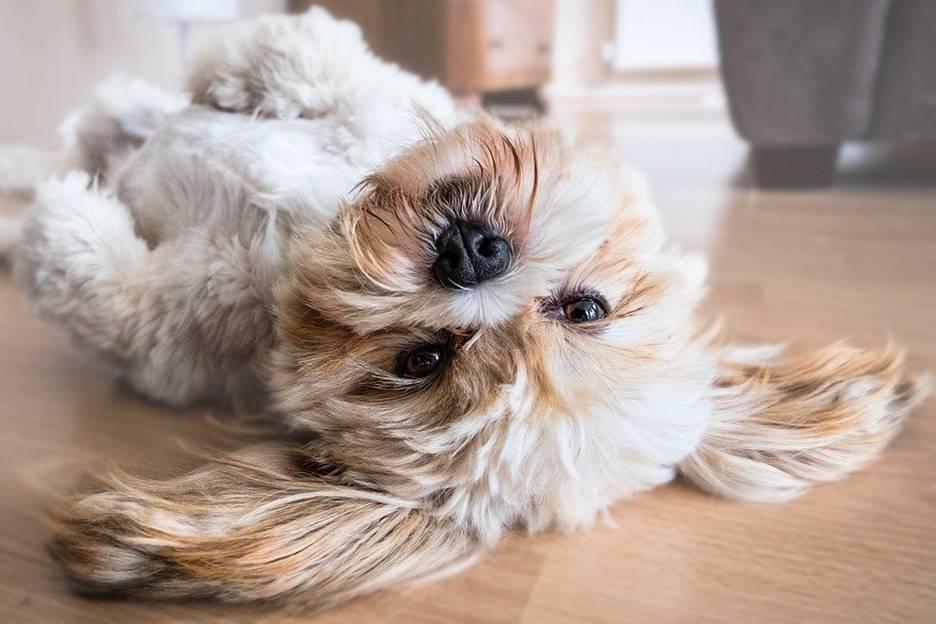Eliminating Animal Odours